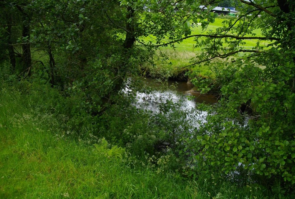 £15,000 paid by Pencefn Feeds LTD to West Wales Rivers Trust after river pollution