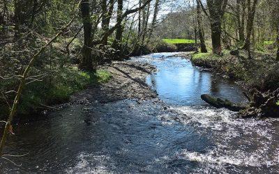 Illegal gravel removal puts river wildlife at risk / Peryglu bywyd gwyllt afonydd drwy dynnu graean yn anghyfreithlon