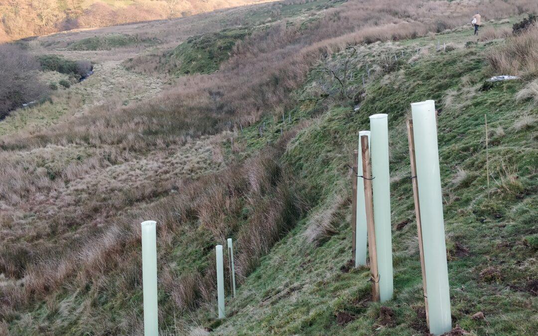 Tree planting in the Teifi catchment / Plannu coed yn nalgylch Teifi