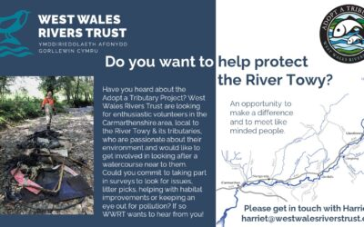 Join our Adopt a Tributary volunteer scheme in Carmarthenshire!